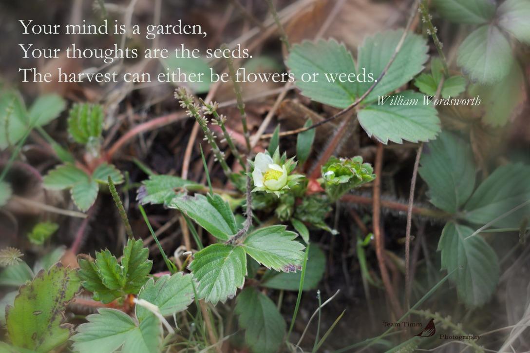 flowersandweeds