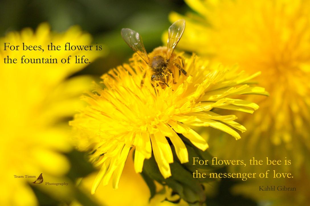 springbee